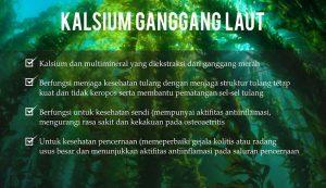 mitra agen resmi lvn collagen bisnis sinergy pt best